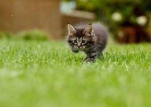 mutuelle chaton