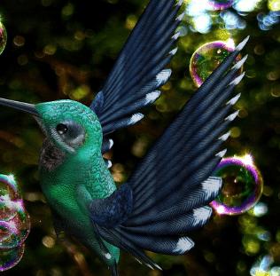colibri comparateur