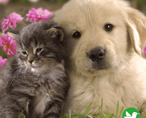 mutuelle chat chien