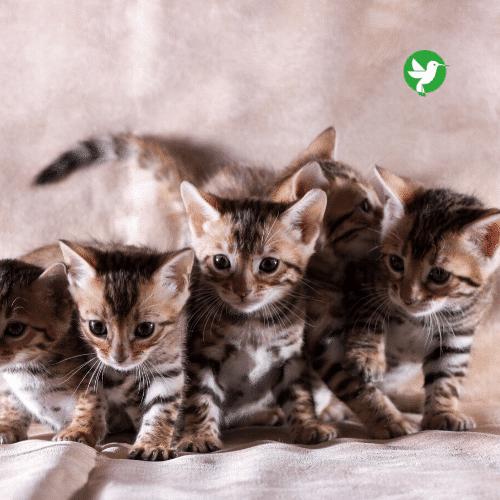 assurance mutuelle chat
