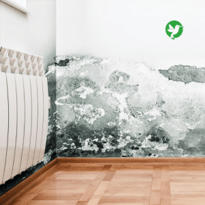 dégât des eaux maison